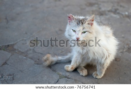 Vagrant cat. Dirty an animal in the street