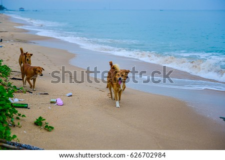 vagrant dogs on the beach