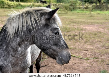 Valdeblore, France - September 22, 2016 : Horses in a meadow in the mountains