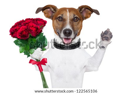 valentine dog  with a bunch of  red  roses waving