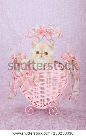 Valentine Exotic kitten sitting inside pink heart shape basket on pink background  - stock photo