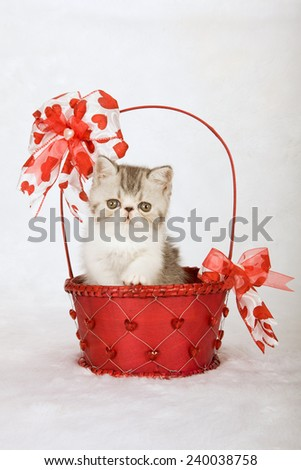 Valentine Exotic kitten sitting inside red decorated Valentine basket on white fake faux fur background  - stock photo