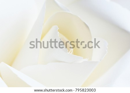 Valentine for background White papers roses White petals. or other occasions, abstract. valentine's day concept about love cards for designing your ideas.