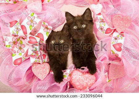 Valentine kittens sitting inside pink Valentine wreath on light pink background  - stock photo