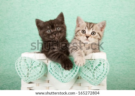 Valentine or Mother Day theme kittens sitting inside white wicker basket with mint green heart shaped crochet ornaments on mint green background - stock photo