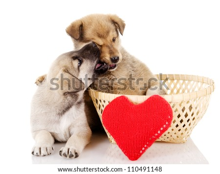 Valentine puppies with a heart. isolated on white background - stock photo