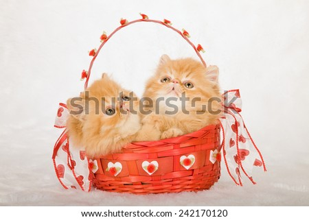Valentine red Persian kittens sitting inside red Valentine basket on white fake faux fur background - stock photo
