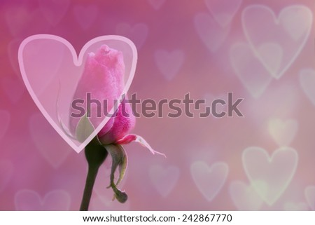 Valentine's day background with rose and hearts. Pink rose. Pink heart background with red rose. Valentine Hearts Abstract Pink Background - stock photo
