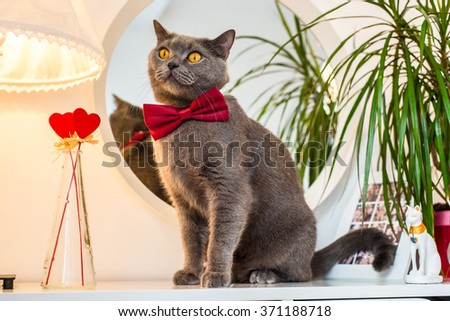 Valentine's Day cat in a red tie on a table with hearts