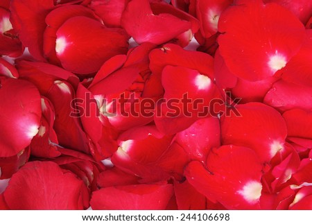Valentine's Day, Red rose petals background - stock photo