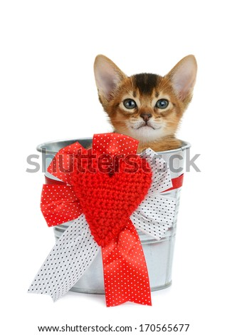 Valentine theme kitten sitting in a silver bucket with red heart isolated on white background