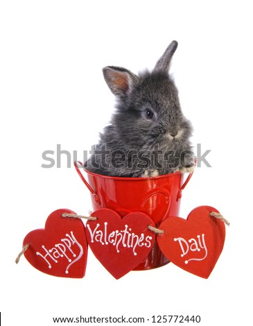 """Valentines Day bunny rabbit with red heart that says"""" Happy Valentines Day"""" isolated on white background - stock photo"""