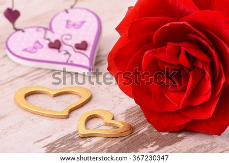 Valentines day in romance with red rose