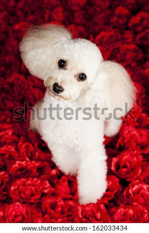 valentines dog - stock photo