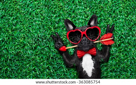 valentines french bulldog dog in love holding a cupids arrow with mouth ,wearing sunglasses,lying on meadow grass in park , with peace or cool victory fingers, negative space to left - stock photo