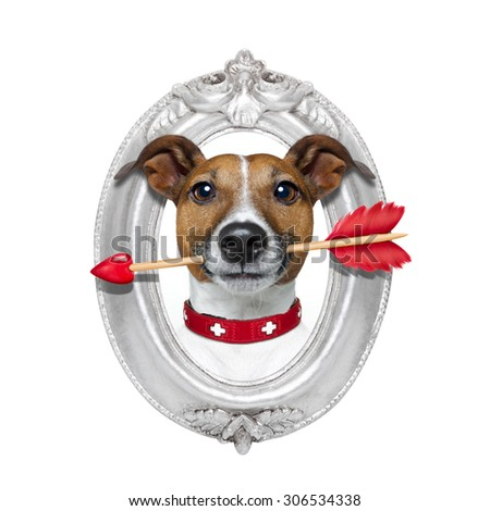valentines jack russell dog in love holding a cupids arrow with mouth in a retro wood frame isolated on white background - stock photo