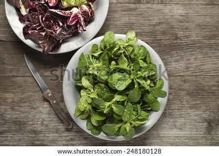 Valerianella lettuce in a plate close up - stock photo
