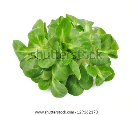 Valerianella lettuce isolated. salad - stock photo