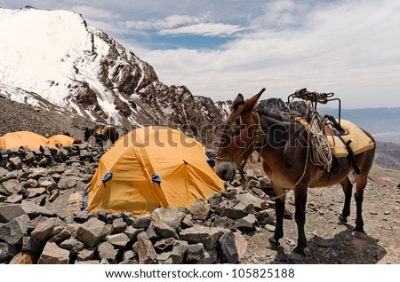 Vallecitos, Mendoza, Argentina. Cargo Mule on Salto de Agua high altitude camp, at 4500 meters over the sea level. - stock photo