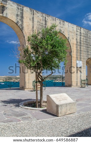 Valletta, Malta - May 9, 2017: Tree planted by HRH the Duke of Gloucester kg GCVO on 14 april 2012 to commemorate the diamond jubilee of HM Queen Elizabeth II in upper Barrakka Gardens.