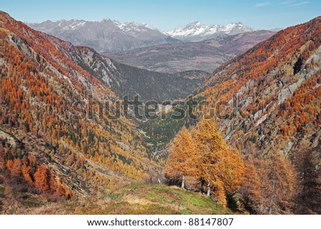 Valley during fall