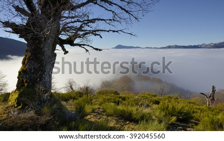 Valley in the fog