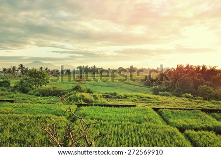 Valley with rice fields at sunrise in vintage color - stock photo