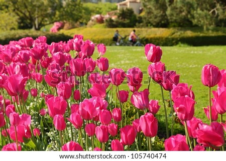 Vancouver Bike Path and Tulips. A portion of the cycle and pedestrian path that circles False Creek in Vancouver behind a bed of tulips. British Columbia, Canada. - stock photo