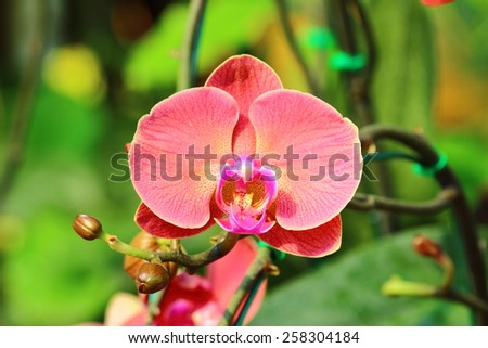 Vanda orchids are One of the orchid family (Orchidaceae), a genus is not very big (about 50 species) - stock photo