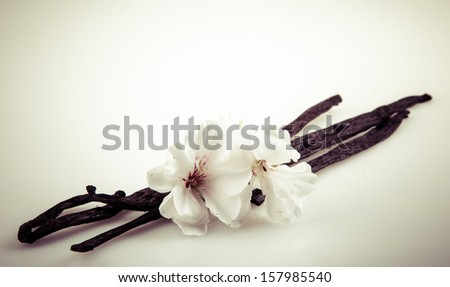 Vanilla Bean And Flower - stock photo