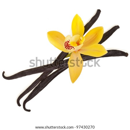 vanilla orchid pod isolated on white background - stock photo