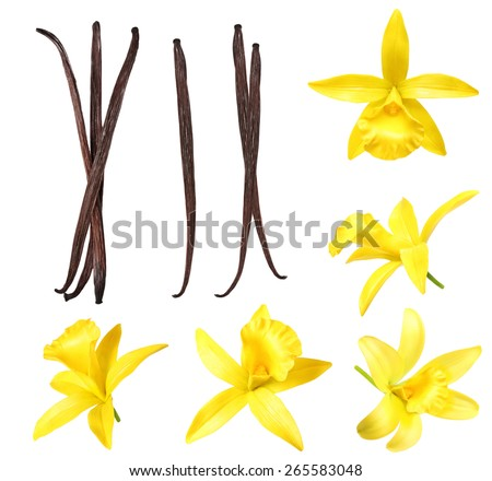 Vanilla pods and flower isolated on white background - stock photo