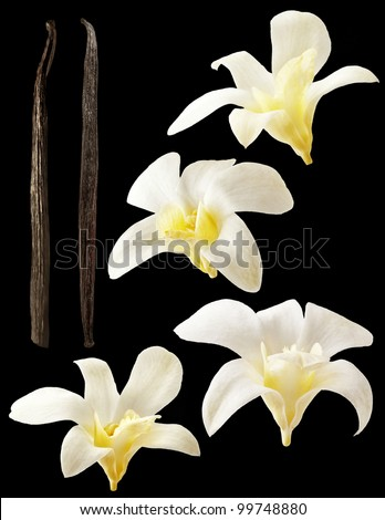 Vanilla pods and flower on black background