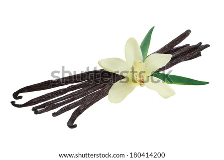 Vanilla Pods and Orchid Flower - stock photo