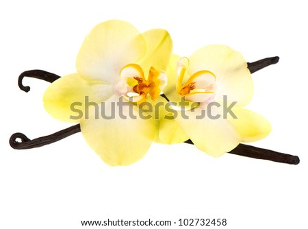 vanilla pods and orchid flower isolated on white background - stock photo