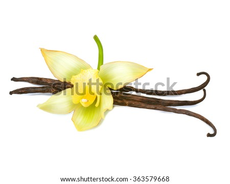 Vanilla. Vanilla pods and flower isolated on a white background - stock photo