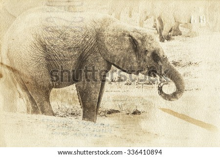 Vanishing Africa: vintage style image of a young Elephant in the Hlane Royal National Park, Swaziland
