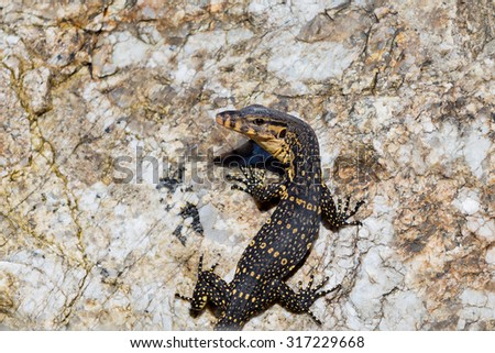 Varanus - stock photo