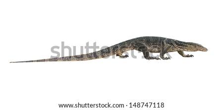 Varanus salvator isolated on white background - stock photo