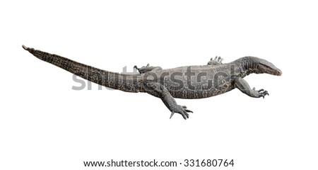 Varanus salvator, Isolated on white background. - stock photo
