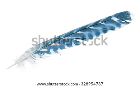 variegated blue feather isolated on white background