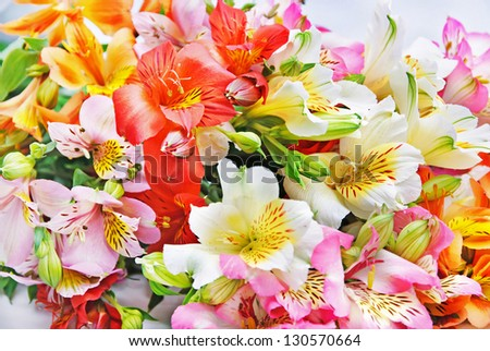 variegated bright colorful Alstroemeria Lily Spray isolated on white background - stock photo