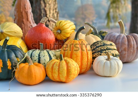 Varieties of pumpkins and squashes collection. Outdoor shot - stock photo