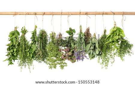 variety fresh herbs hanging isolated on white background. basil; rosemary; sage; thyme; mint; oregano, marjoram; savory; lavender - stock photo