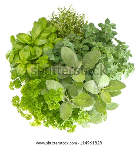 variety fresh herbs isolated on white background. marjoram, parsley, basil, rosemary, thyme, sage - stock photo