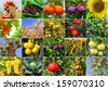 Variety of agricultural production of the Mediterranean (all images belong to me) - stock photo