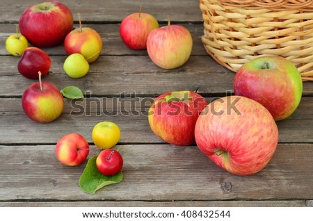 Variety of apples on a wooden table in the garden. Selective focus - stock photo