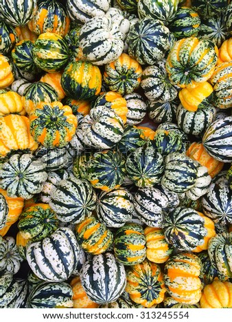 Variety of carnival squash at the autumn market. - stock photo