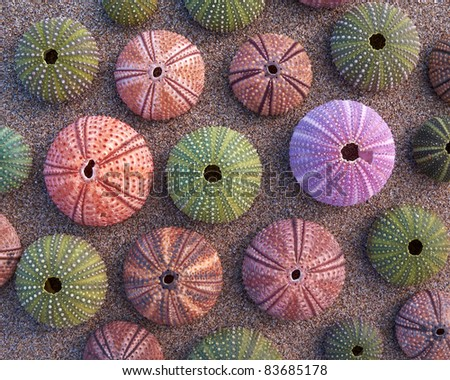variety of colorful sea urchins on wet sand, natural background