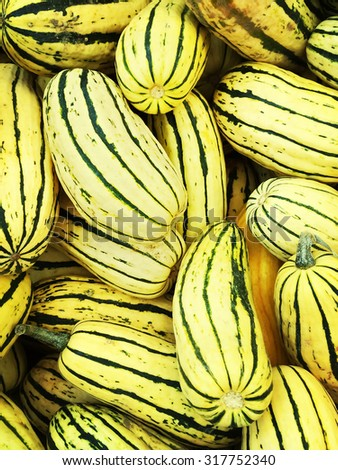 Variety of Delicata squash at the autumn marketplace. - stock photo